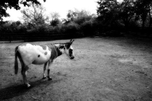 002_donkey
