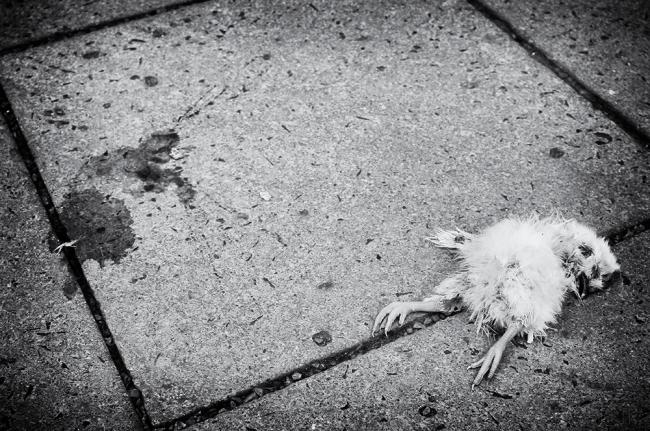 002 - Dead Chicken