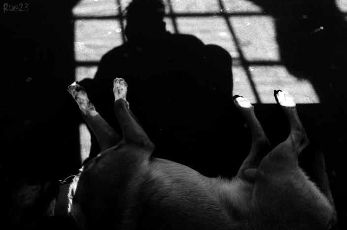 Ein Schatten und sein Hunde